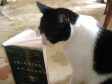 Literary cat reads second book